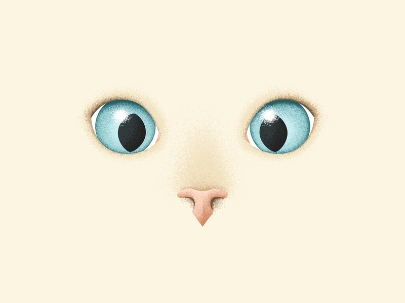 My cat is looking at you 🐈