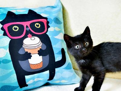 Blact cat. Pillow
