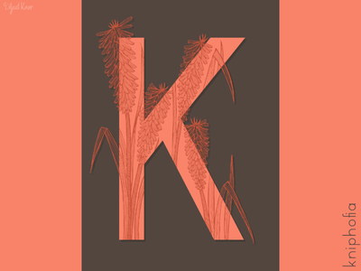 The Letter Series: K drawing illustration alphabet lettering letter typography doodle art design