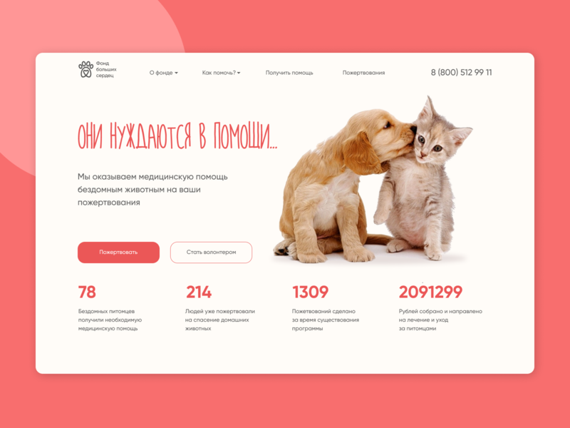 Charity fund for homeless pets pets website webdesigner webdesign uiux uxdesign ux dog cat charity