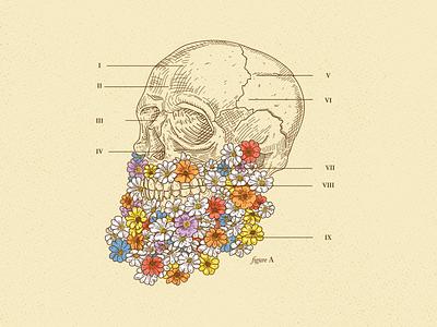Sneak Peak beer label illustration flowers skull anatomy