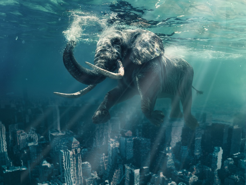 A gentle giant goes for an ocean swim over Manhattan water city animal elephant animals photography digital manipulation manipulation collage composition photoshop