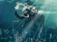 A gentle giant goes for an ocean swim over Manhattan