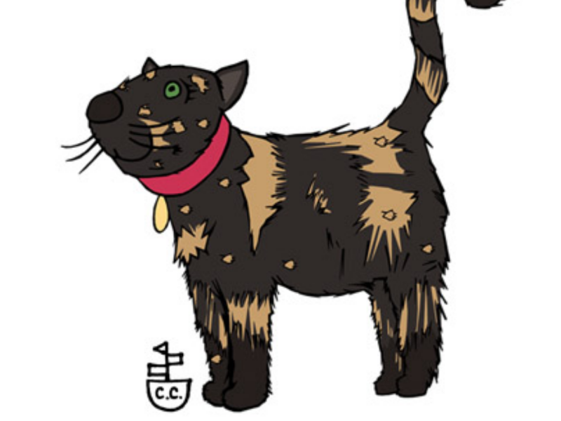 A cat with real personality animal character animal illustration animal art cats character development characters illustrator illustration