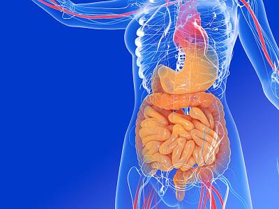 3D internal human anatomy 3d art anatomy design medical 3d illustration