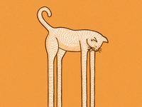 Catdaddy Long Legs