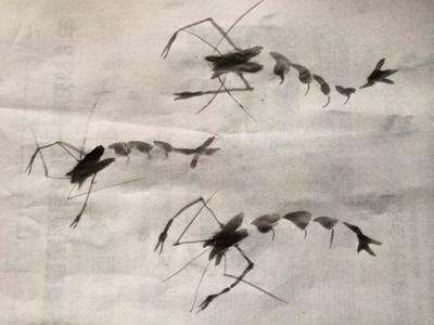 Shrimp - Chinese Painting