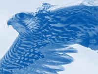 Falcons Corner Poster