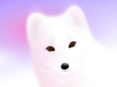 Arctic fox Aurora