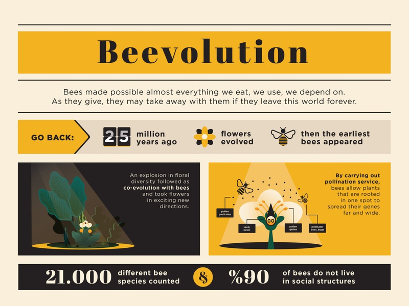 Bee Hotel Infographic forest exotic evolution flowers plants polen sustainable environment post content marketing explainer infographic icon bee illustration