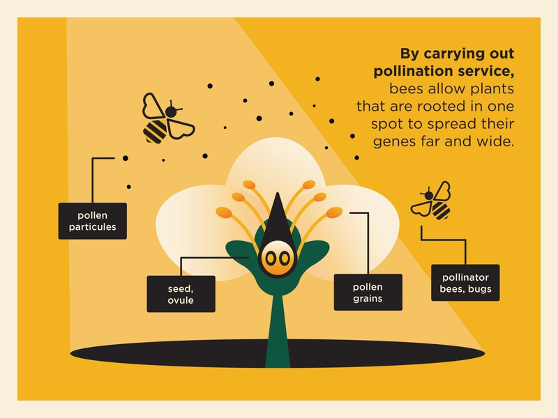 Bee Hotel Infographic pollinator particule grain spotlight focus explainer storytelling infographic yellow botanical botanic floral flower beer service pollen digitalart environment bee illustration