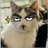 汤姆不是猫