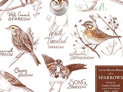 Sparrows Poster nature nature art birding birds caseygirard poster illustration sparrows