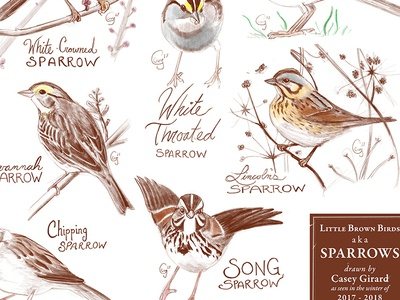 Sparrows Poster