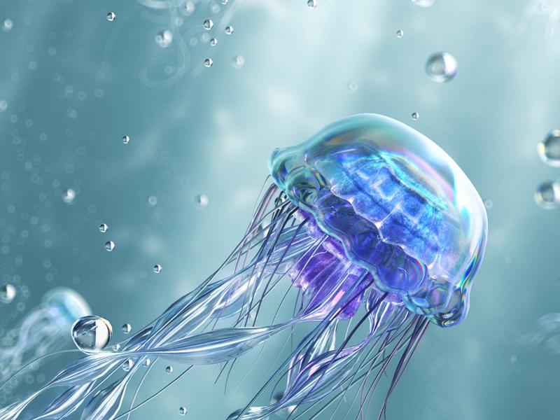 Jellyfish 3D branding design art visual art graphicdesign still cinema white branding 3d illustration c4d ui motion animation jellyfish