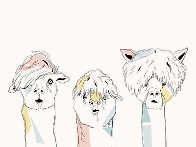 Alpaca lama illustration alpaca