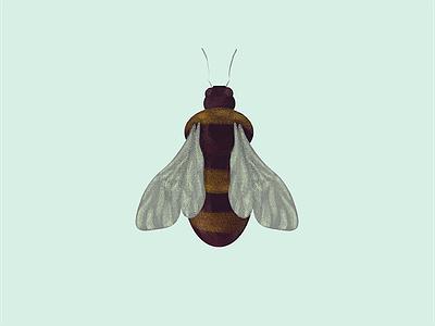 Texture Bee ipad artist adobe fresco pastel mixer brush texture brush illustration texture bee