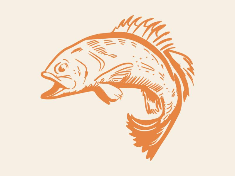 Trout cutthroat trout logo illustation brand and identity illustrator drawing design branding fish