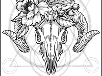 Emelianova Skull