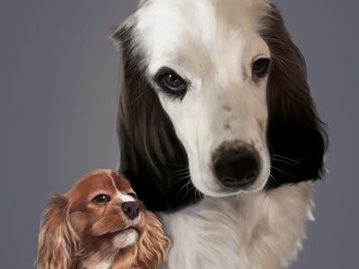 pet portrait dog dog illustration pets illustration digital painting digital illustration digital art