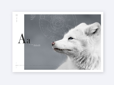 A is for Arctic Fox