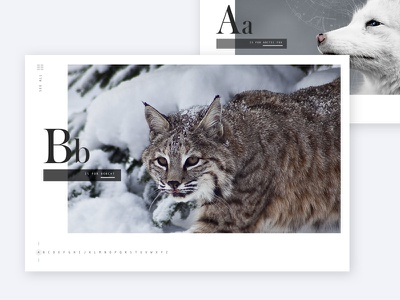 B is for Bobcat modern clean website web layout learning alphabet wildlife nature lynx bobcat
