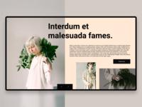Web Design Concept / 1