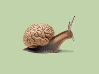 Snail + Brain