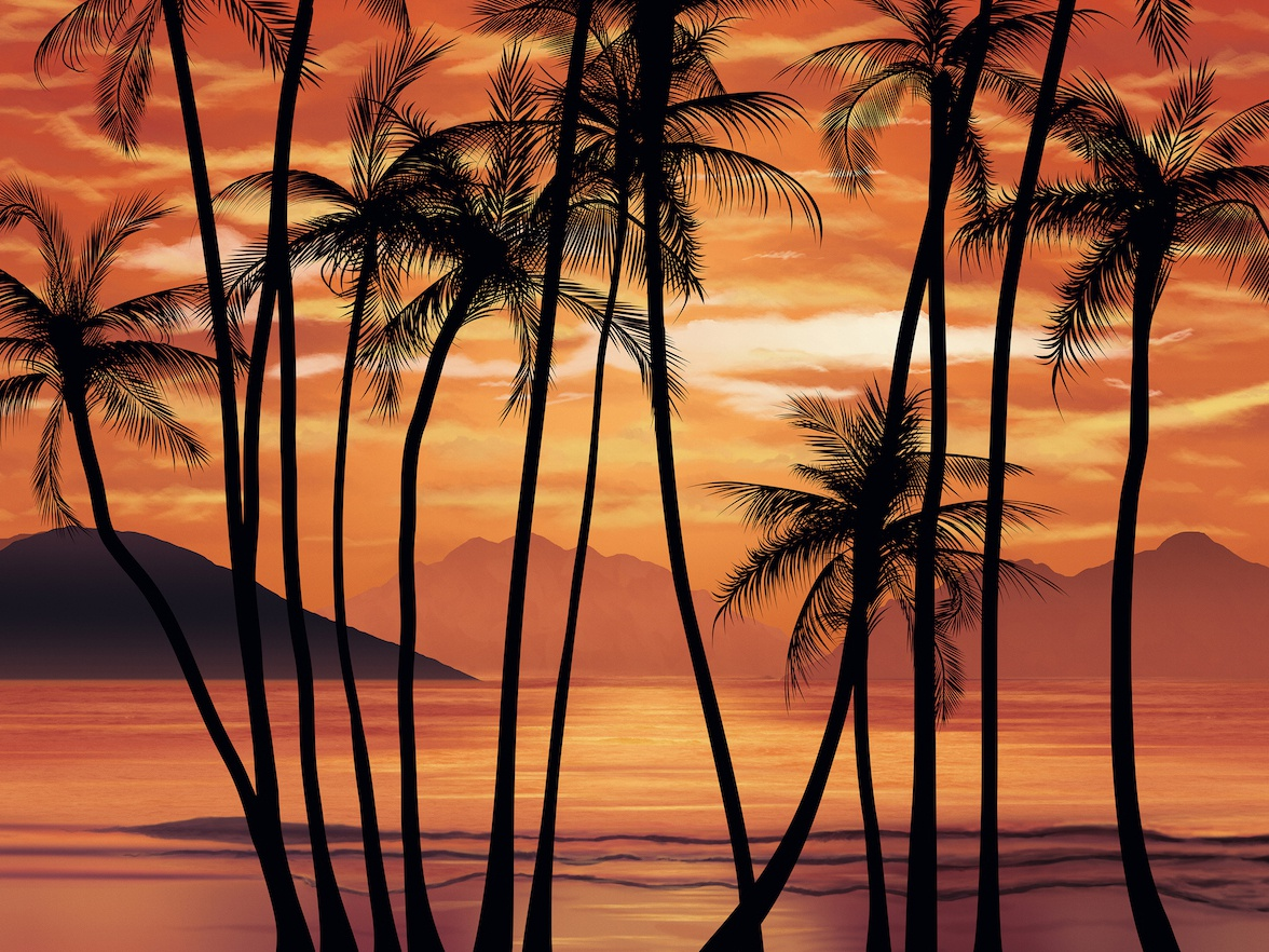 Scarface inspired tropical wallpaper design cloudy mountains palms shore sea photoshop illustration vector photorealistic 80s vintage sunset remake wallpaper loop tropical scarface