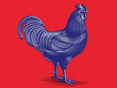 Fowl Play the famous frouws illustration wine label engraving woodcut vintage simon frouws wine rooster chicken packaging design packaging