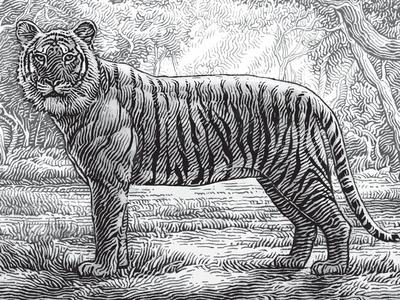Kadu Wine Label wine label forest jungle india tiger simon frouws sula vineyards woodcut etching engraving stamp illustration