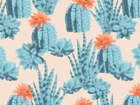 Succulents Pattern