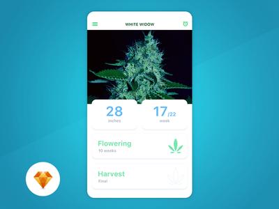 Grow Box - Day94 My UI/UX Free SketchApp Challenge ux ui challenge harvest app mobile day 100 marijuana grow sketchapp
