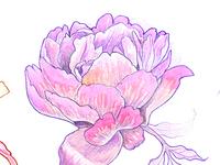 Botanical Tattoo Sketches
