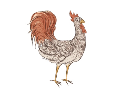 Rooster character procreate rooster illustration