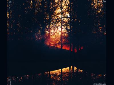 Forest Fog sunset forest fog design art artwork design c4d cinema4d 3d