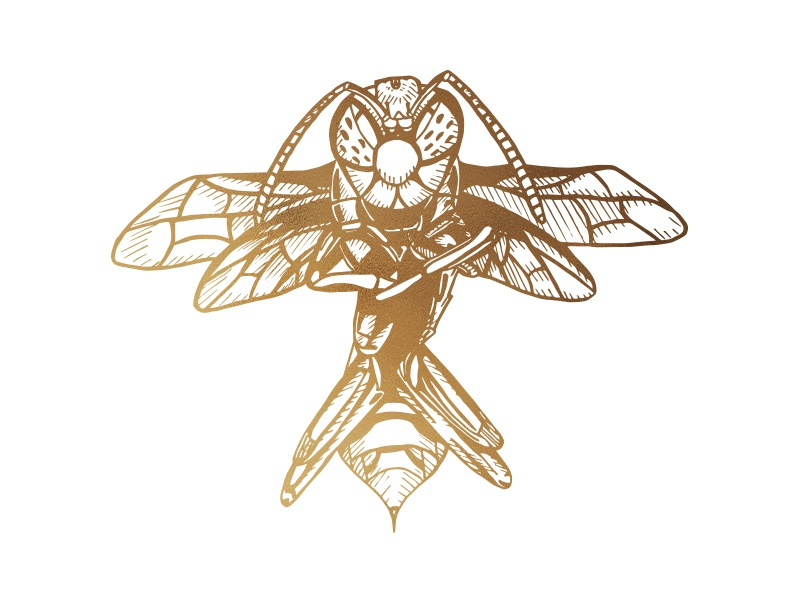 Golden Hornet redbubble society6 vector illustration digital design graphic design animals insect mother nature ink art angry animal illustration insect illustration animal art animal gold hornet lineart wasp insects