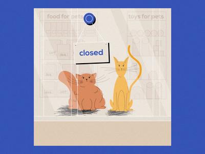 Quarantine cats