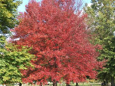 Fall Foliage - Red pennsylvania fall leaves fall colors fall foliage