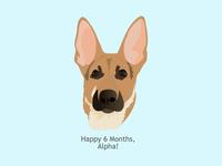 Puppy Alpha 6 months