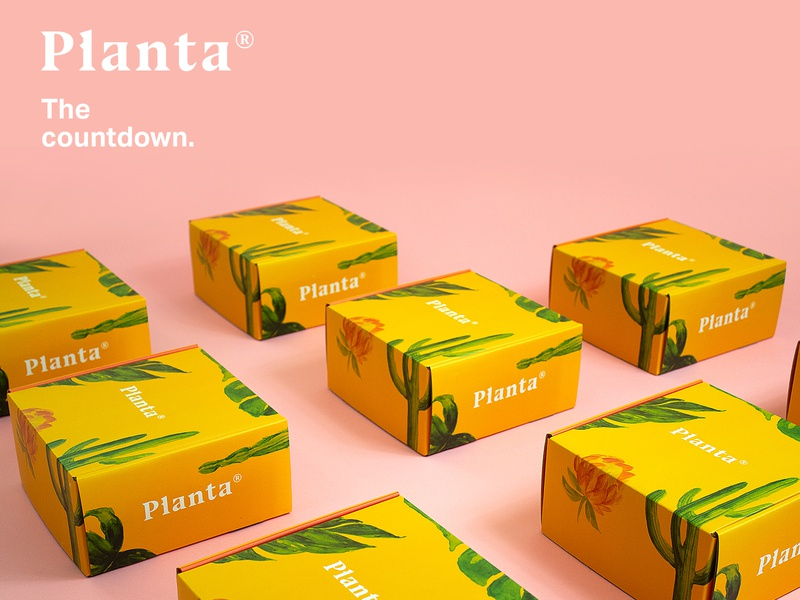 Planta® logo web design minimal greenhouse ui photgraphy