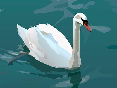 Swan swim lake waterfowl bird swan