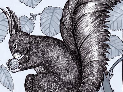Squirrel II marker hazelnut squirrel