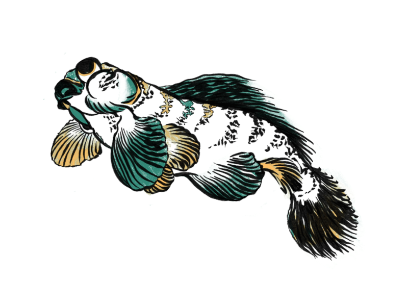 Hokusai Fish manga japan fish hokusai illustrator ipad procreate ipad pro illustration