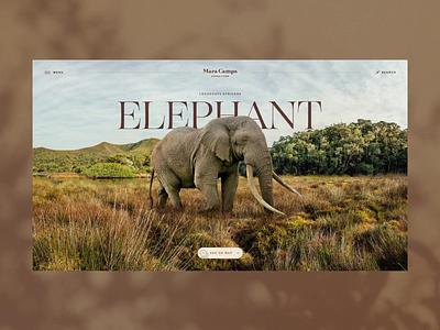 Mara Camps Safari Elephant page elephant africa safari motion graphics animation travelagency inspiration creative travel logo illustration branding o2d webdesign design ux ui