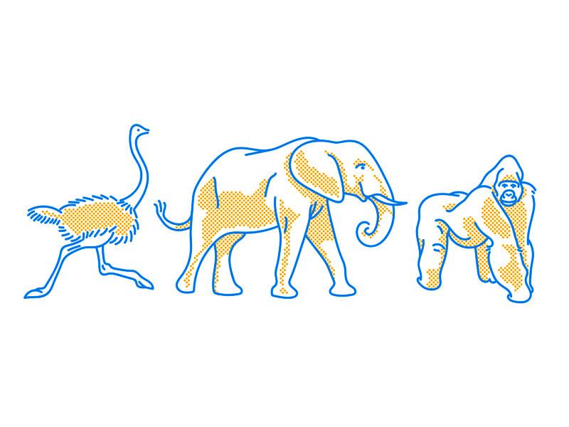 Animals gorilla ostrich elephant simple minimal line color illustration animals