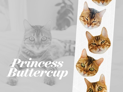 The Many Faces of Princess Buttercup cats tape sticker mule