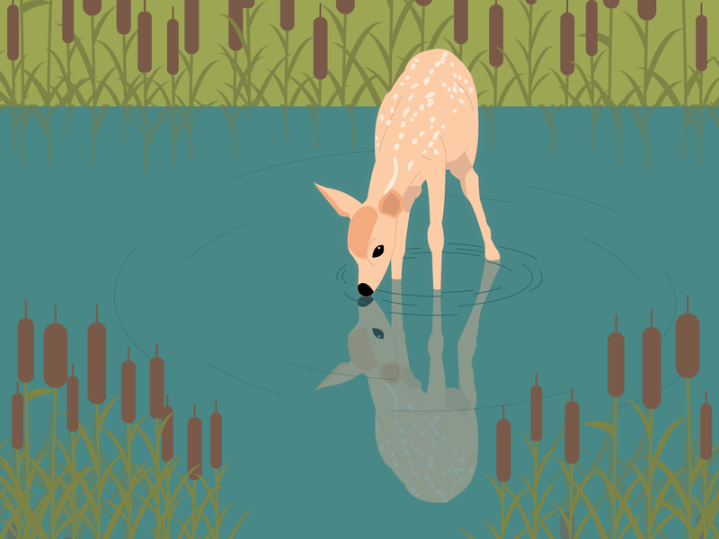 Little fawn baby fawn water cute forest illustrator art illustrator illustration