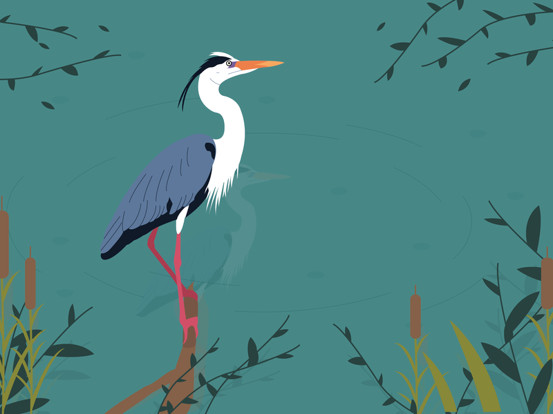Dinosaur bird bird heron water illustrator art illustrator illustration