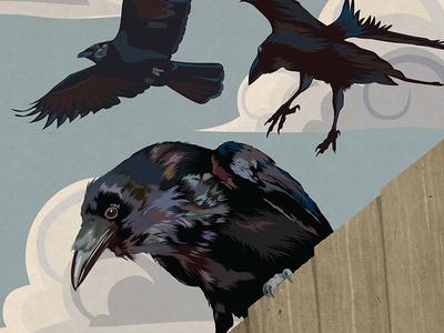 Crow Invasion